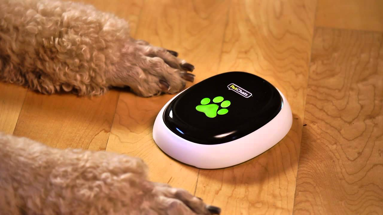 Pet Camera • Digital Pet DayCare • Two-Way Video Chats