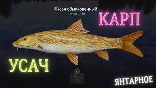 Русская рыбалка 4 РР4 озеро Янтарное КАРП УСАЧ Russian fishing 4 РР4 lake Amber carp barbel