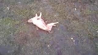 В Одессе с собаки содрали шкуру. Живодеров ищут.