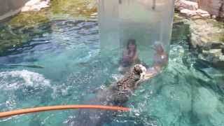 Swimming with Crocodiles - Cage of Death - Croc Cove - Interview