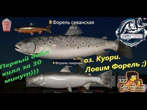 Русская Рыбалка 4. оз. Куори. Точка для ловли Форель Севанка и Озерка.