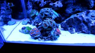 part 2 in hd my 29 gallon marine salt water aquarium coral reef fish tank led lights saltwater