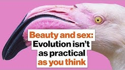 Beauty and sex: Evolution isn't as practical as you think | Richard Prum