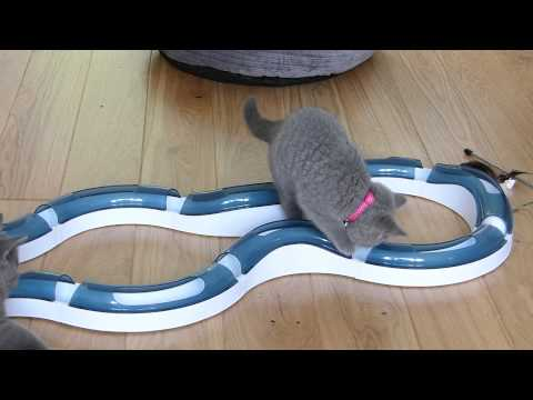 Teddy & Honey Review - Cat IT Design Senses Super Roller Circuit