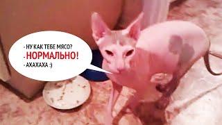 ГОВОРЯЩАЯ кошка. Кошка говорит НОРМАЛЬНО!!!