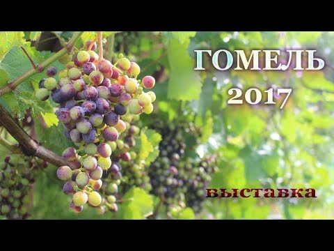 Выставка винограда в Гомеле - 2017 год