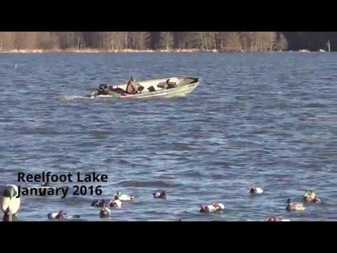 Duck Hunting Reelfoot Lake 2016