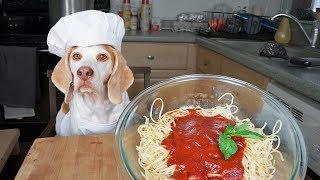 Funny Dog Makes Spaghetti: Chef Dog Maymo