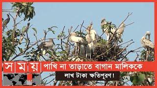 পাখির জন্য বাসা ভাড়া নিয়েছে সরকার ! | Birds | Migratory Birds | Somoy TV