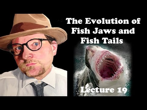 Lecture 19 The Evolution Of Fish Jaws And Fish Tails