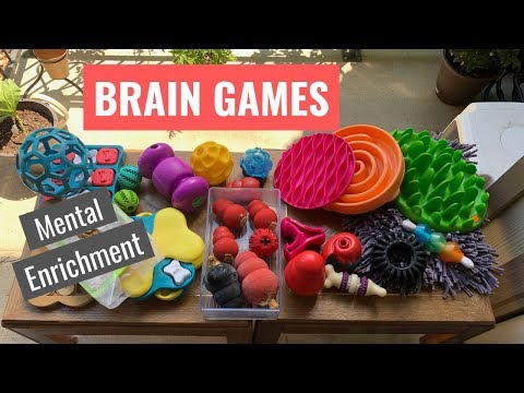 brain-games-for-dogs-mental-enrichment