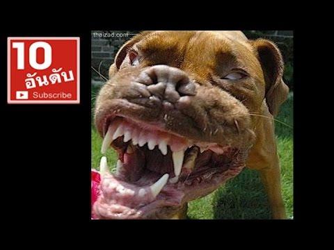 7 สายพันธุ์สุนัขโหดที่สุดในโลก