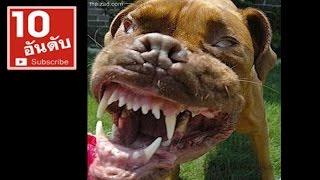Repeat youtube video 7 สายพันธุ์สุนัขโหดที่สุดในโลก