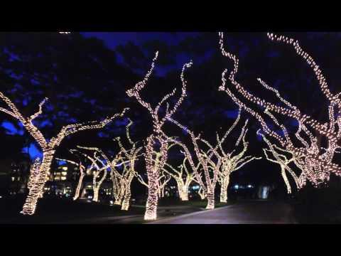 Christmas Lights at Grand Wailea Resort on Maui
