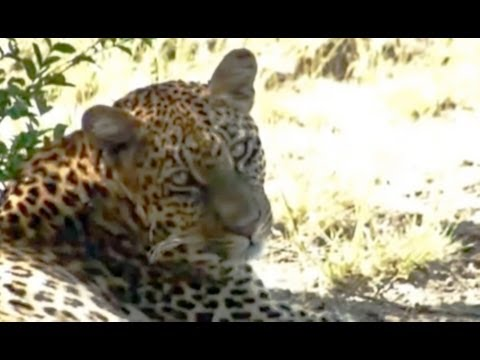 Leopard Relaxing - 21 Feb 2011 - Kruger Sightings