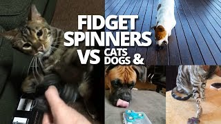 Fidget Spinners VS Dogs & Cats | Best Of Animals Reactions to Finger Spinner
