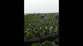 Santa ana hueytlalpan 100% 2015