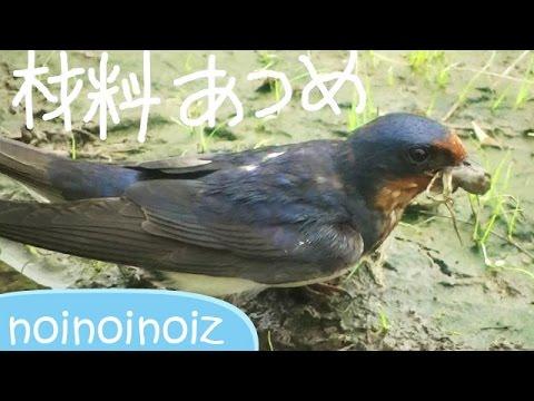 巣 材料 の ツバメ