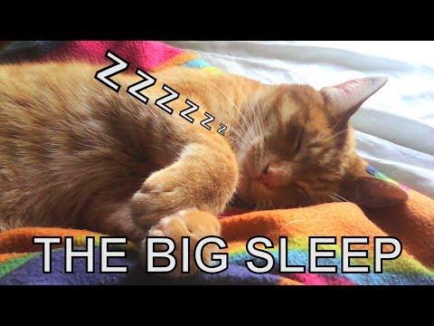 Alvi cat : the big sleep