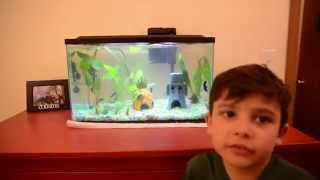 Beginner Fish Tank With Betta Fish And Marble Molly Plus Live Aquarium Plants