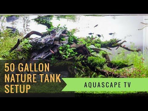 50-gallon-nature-planted-tank-setup-with-seiryu-stone