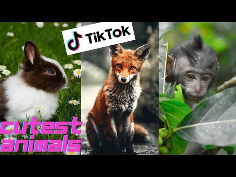 Cutest Animals | Best Of The 2021 Funny Animal Videos | Funniest Animals Ever 🙈