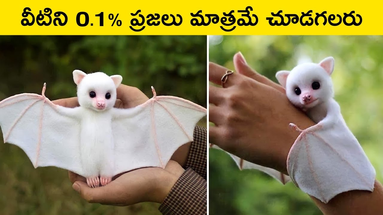Top 10 Beautiful Animals That Will Blow Your Mind
