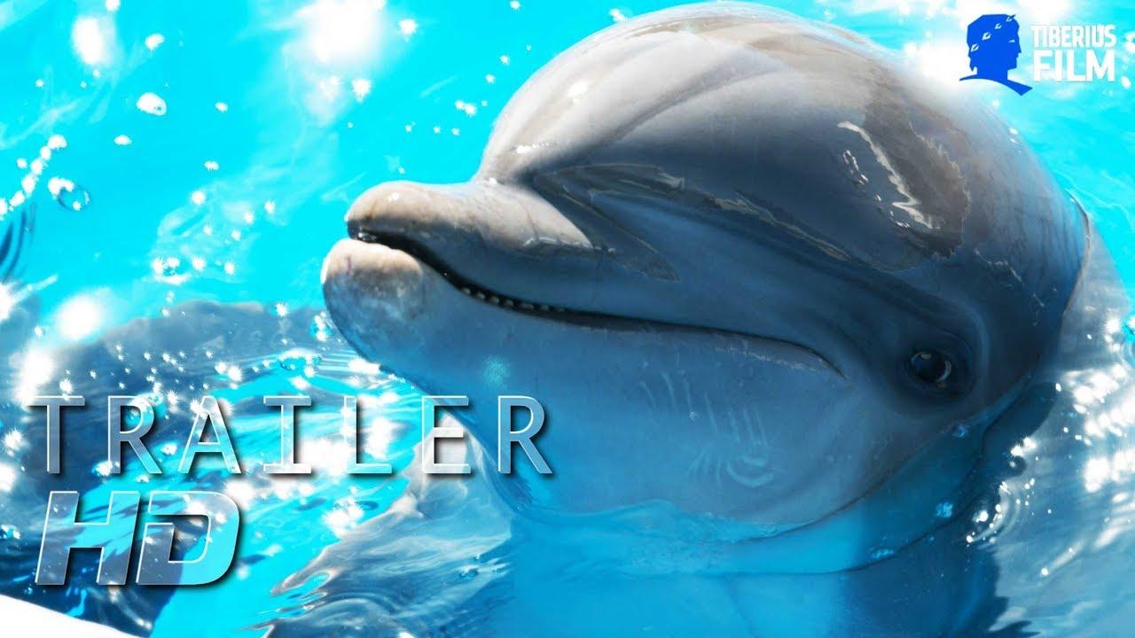 Bernie Der Delfin I Offizieller Trailer I Hd Deutsch