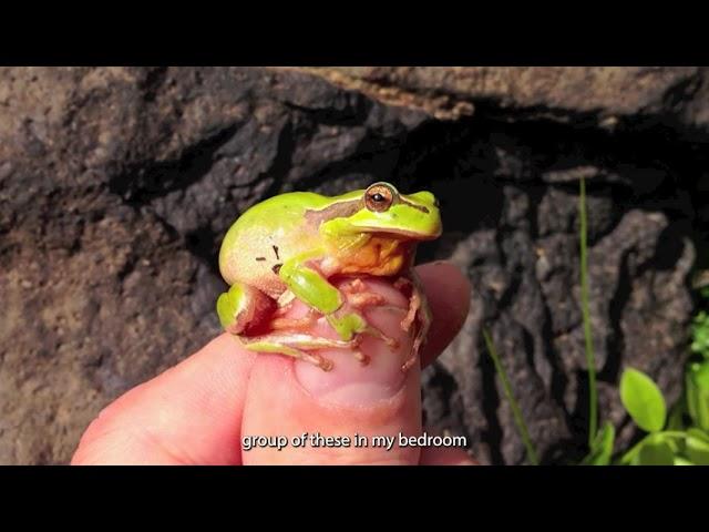 Stripeless Tree Frog - 60 Second Species