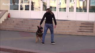Что может собака у хорошего хозяина! Чудеса дрессировки!