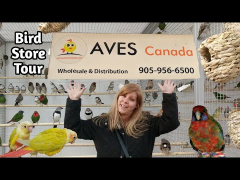Bird Store Tour At Aves Canada | Hundreds Of Birds | Canaries, Finches, Conures, Cockatiels, Bourkes