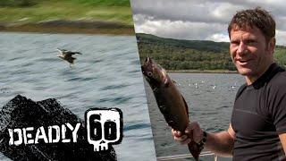 Wild Sea Eagle  Deadly 60  BBC Earth Kids