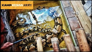 Removing ticks from Fred's giant reticulated python using permethrin