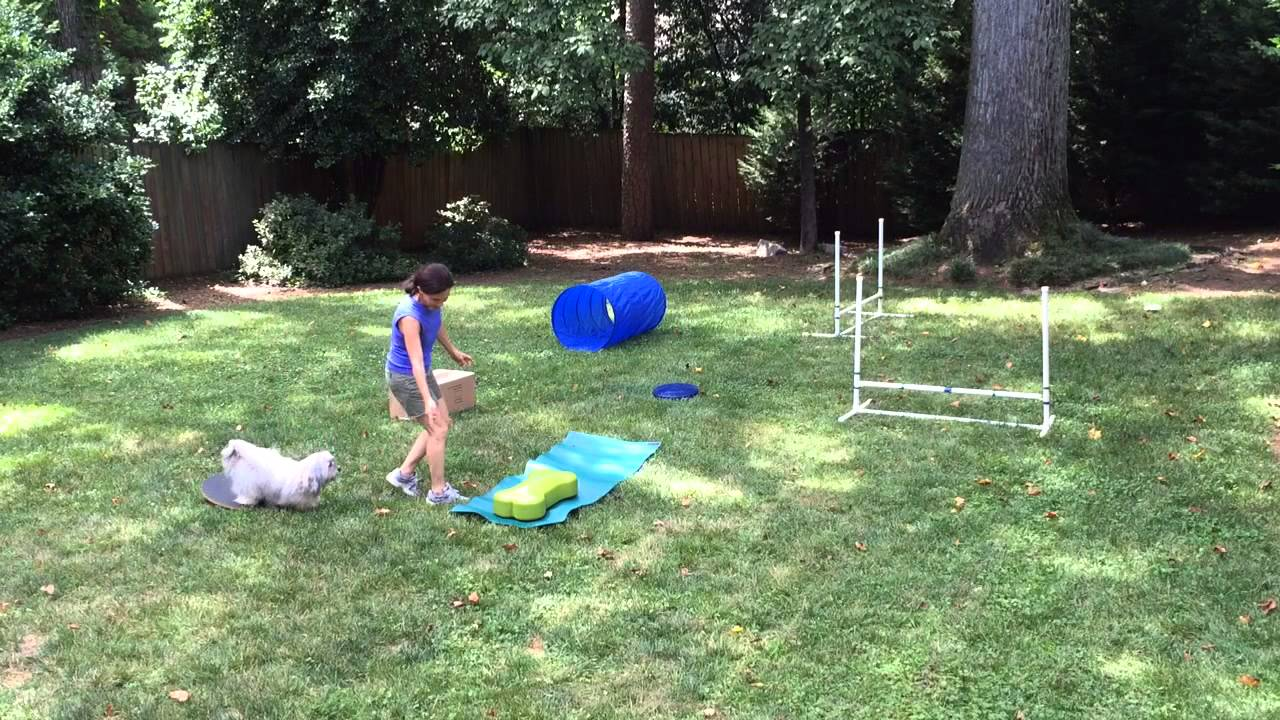 Dog Obstacle Course Video