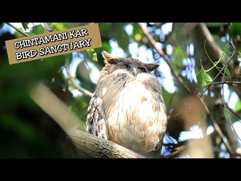 Chintamani Kar Bird Sanctuary | Kolkata | Birding In India #1