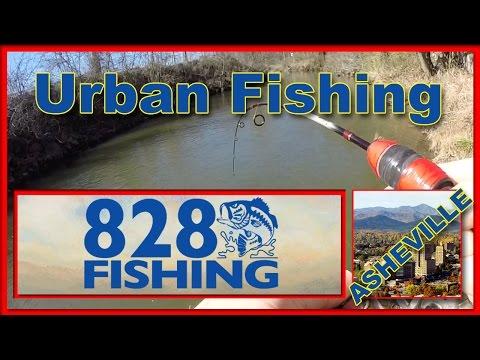 Urban Fishing Swannanoa River Asheville, North Carolina