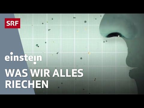 Immer der Nase nach: Wie Gerüche uns beeinflussen - Einstein vom 7. Aptil 2016