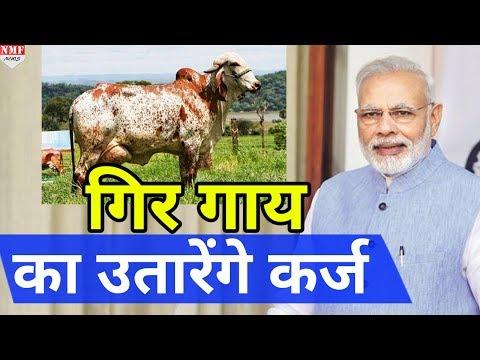 Modi का गायों को लेकर बड़ा फैसला, Gujarat में बनाएंगे Gir cow sanctuary