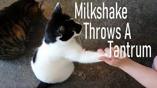 Cat Throws A Tantrum