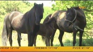 Каракачански кон поддържа биоразнообразието в природата