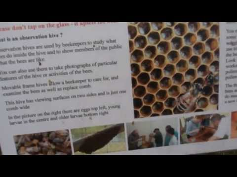 Bee Keeping and what plants attract bees in all seasons