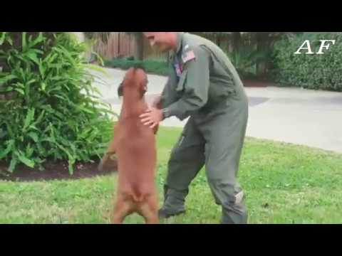 Dogs Welcoming Soldiers Home Compilation -Animal funny