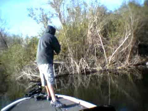 Download Sight Fishing