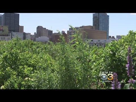 Summerfest: PECO Green Roof