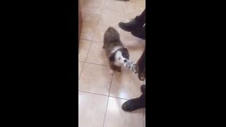 Фрося ищет хозяина, щенок в добрые руки