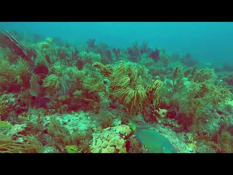 Molasses Reef - Aquarium   8-27-17