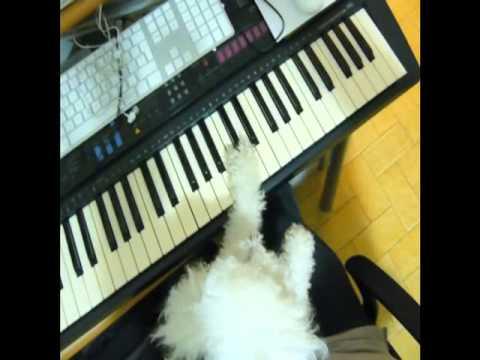 Lilli musicista