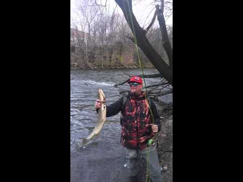 Pike Fishing At Paterson Falls