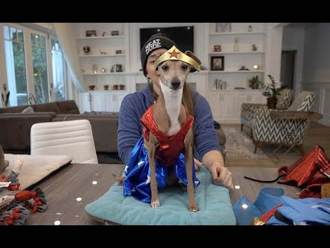 image for Dogs Try On Halloween Costumes