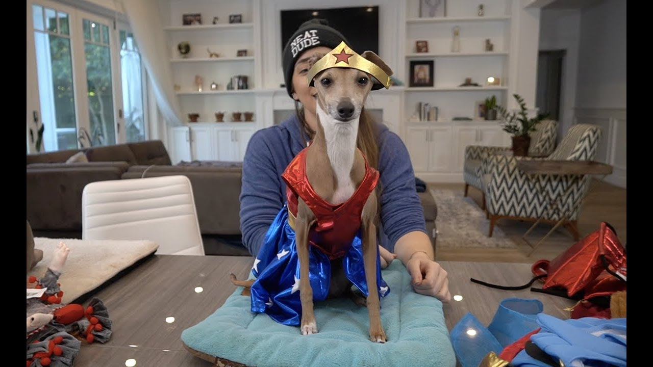 [VIDEO] - My Dogs Try On Halloween Costumes 3 4